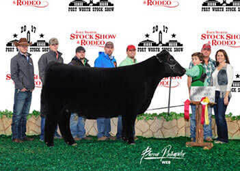 2016-2017 Winners - Tusa Cattle - Show Cattle in Reagan, Texas